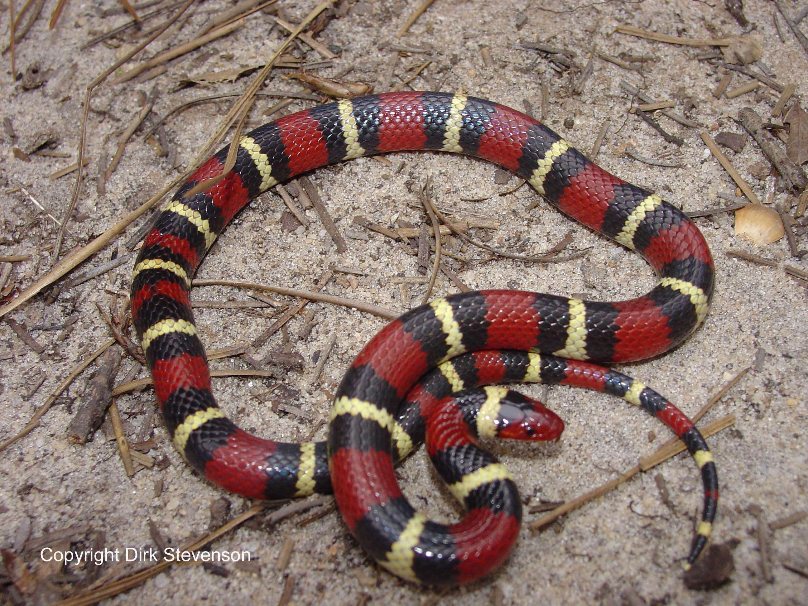 Afraid of snake...