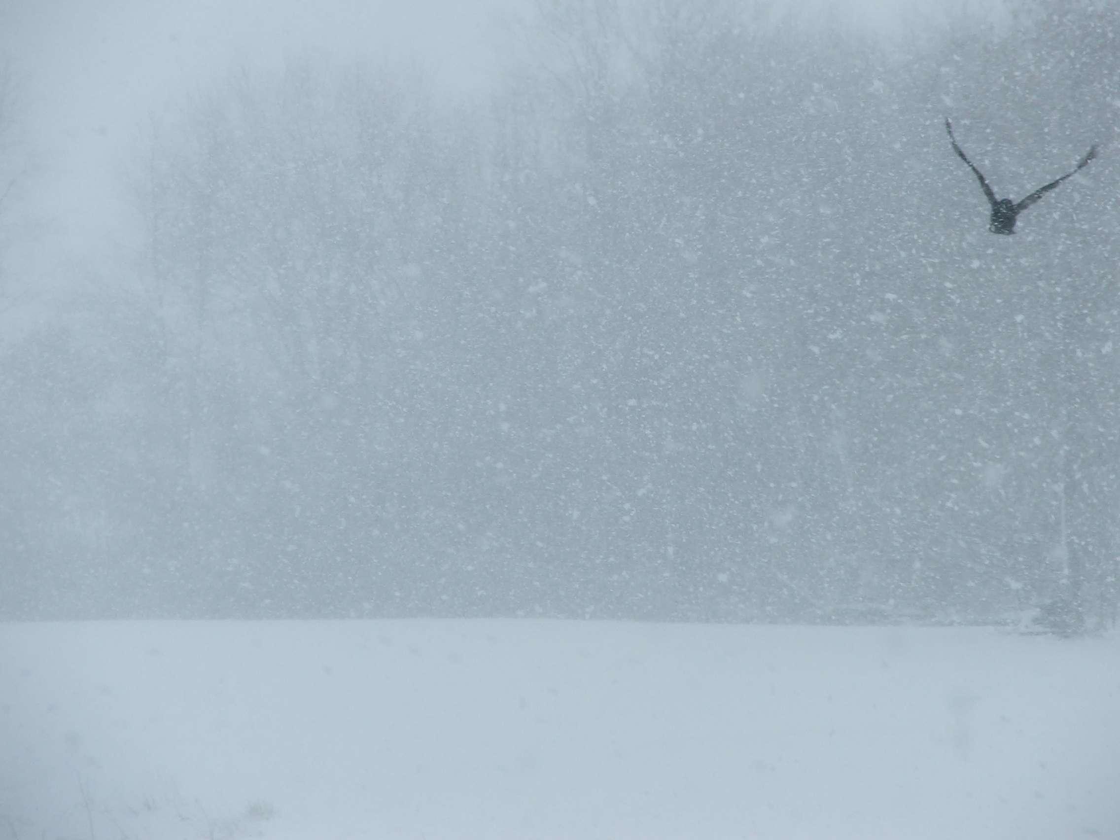 snow1003.jpg